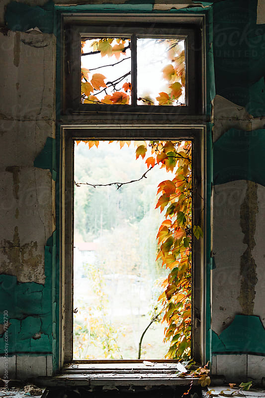 Overgrown window frame by Pixel Stories for Stocksy United