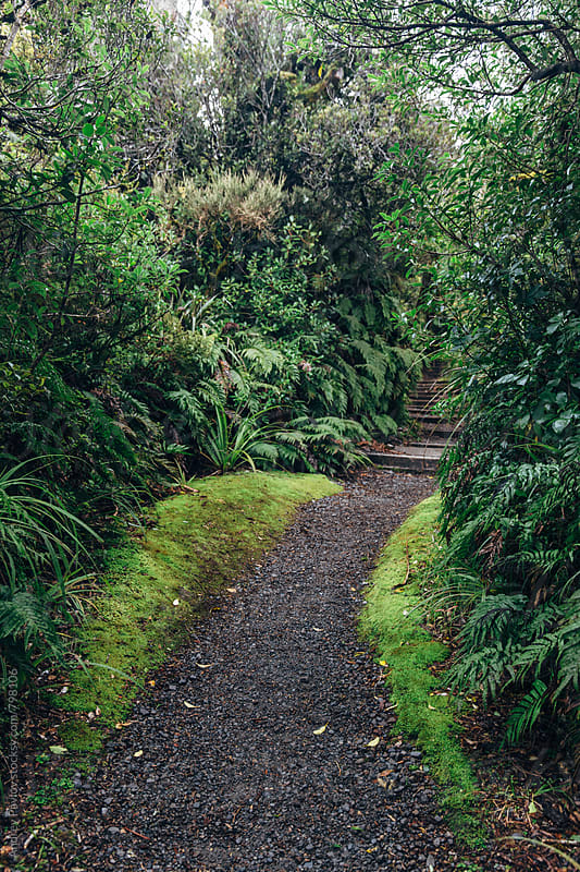 Secluded path in a rainforest by Andrey Pavlov for Stocksy United