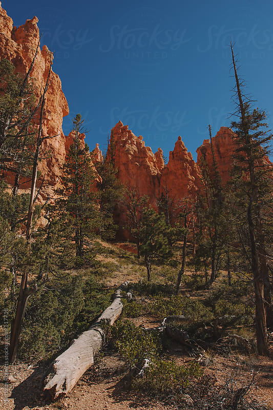 Bryce Canyon by Nicholas Roberts for Stocksy United