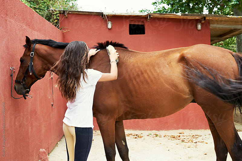 Jockey brushing brown horse