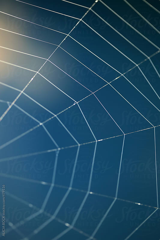 A Detailed Spider Web Built Over Bright Blue Water Glowing In The Morning Sun  by ALICIA BOCK for Stocksy United