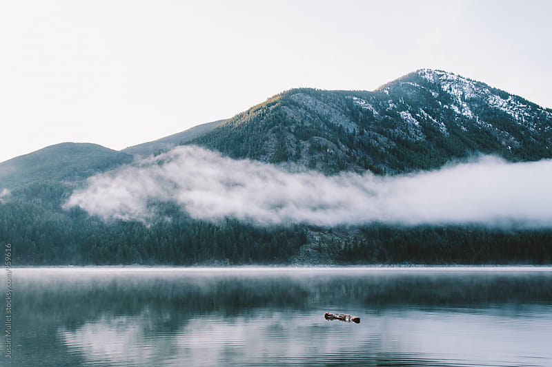 Log floating on a still lake.  by Justin Mullet for Stocksy United