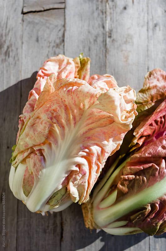Italian pink leaf chicory radicchio by Alessio Bogani for Stocksy United