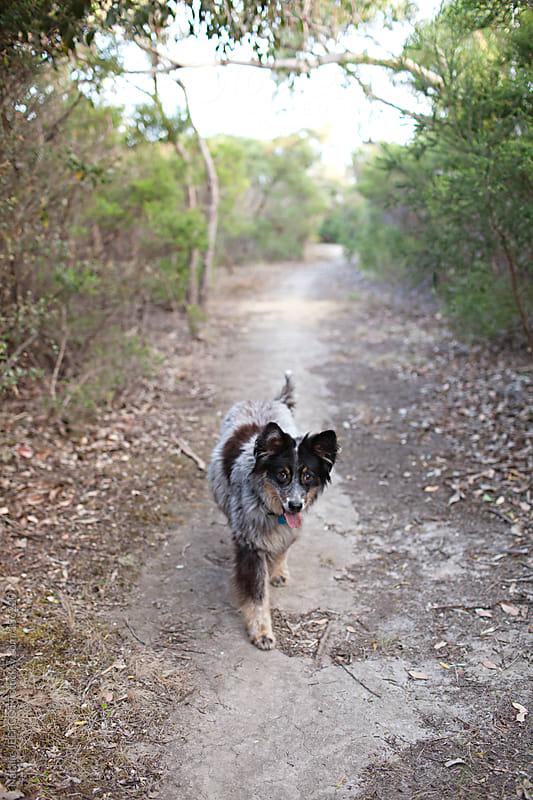A dog takes itself for a walk along a nature trail by Natalie JEFFCOTT for Stocksy United
