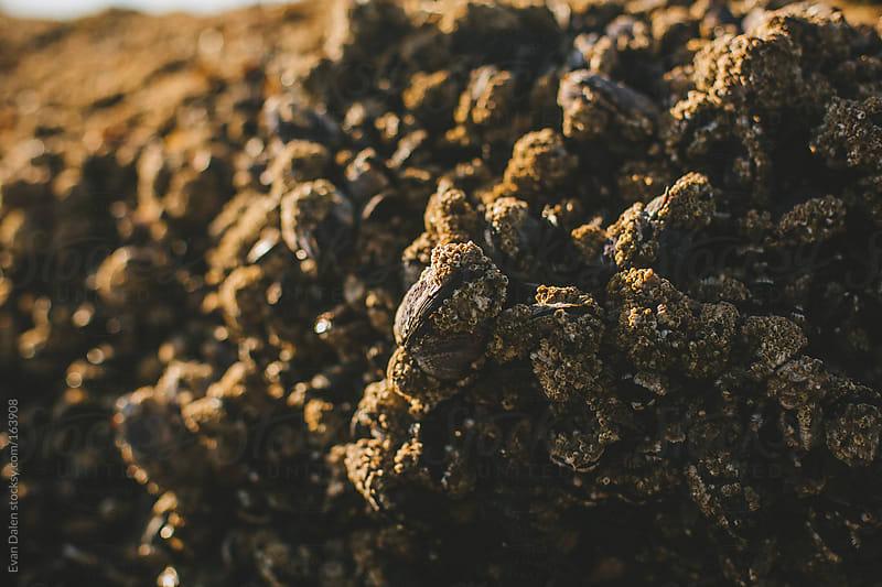 Coastal Lifeforms  by Evan Dalen for Stocksy United