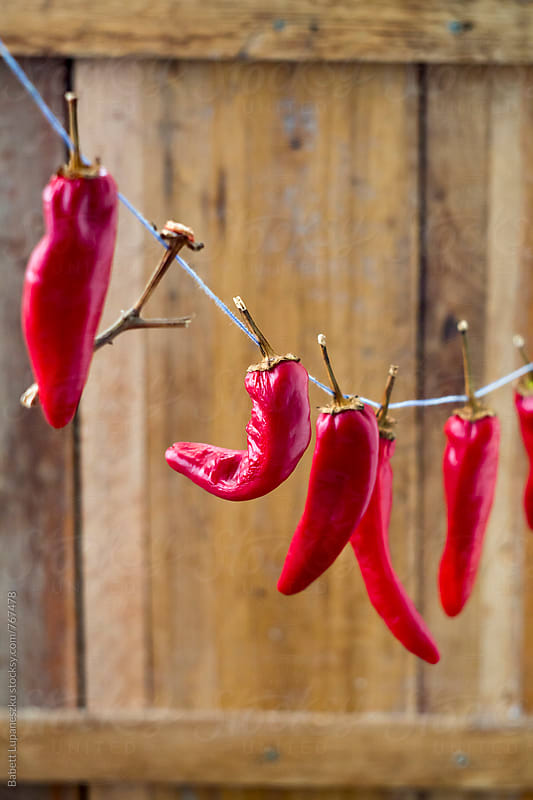 Drying red peppers by Babett Lupaneszku for Stocksy United