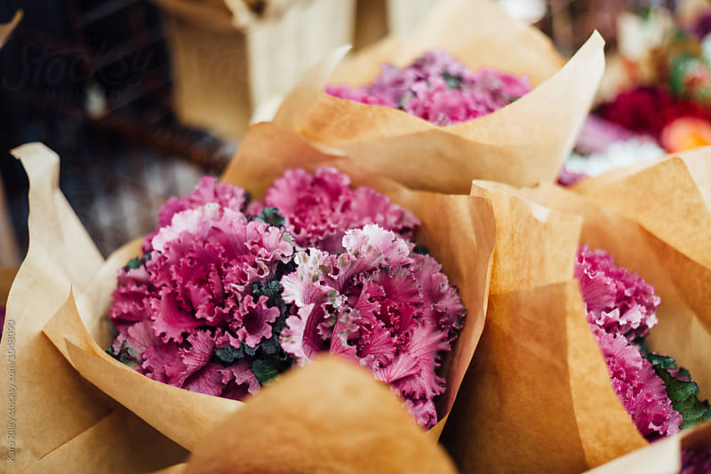 Bunches of Kale flowers at florist by Kara Riley for Stocksy United