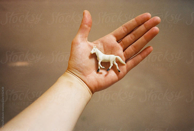 The white horse in the hand. by Nina Zivkovic for Stocksy United