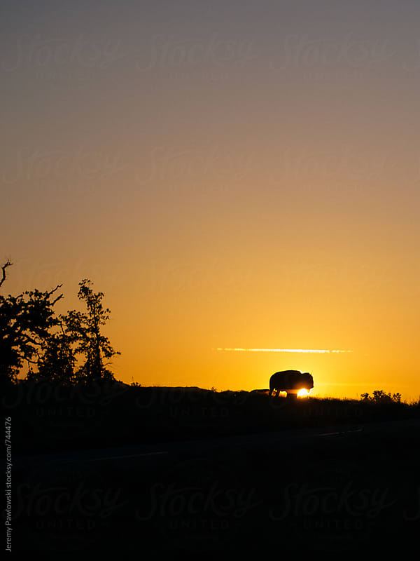 Bison / Buffalo in the sunrise. Oklahoma. by Jeremy Pawlowski for Stocksy United