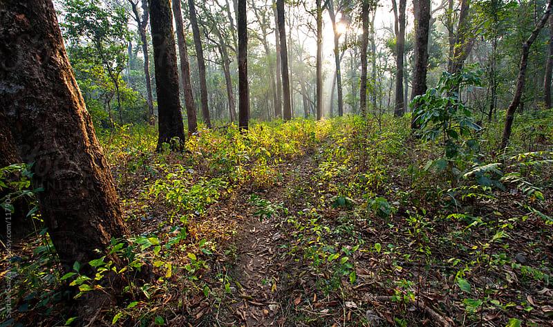 Deep forest by Saptak Ganguly for Stocksy United
