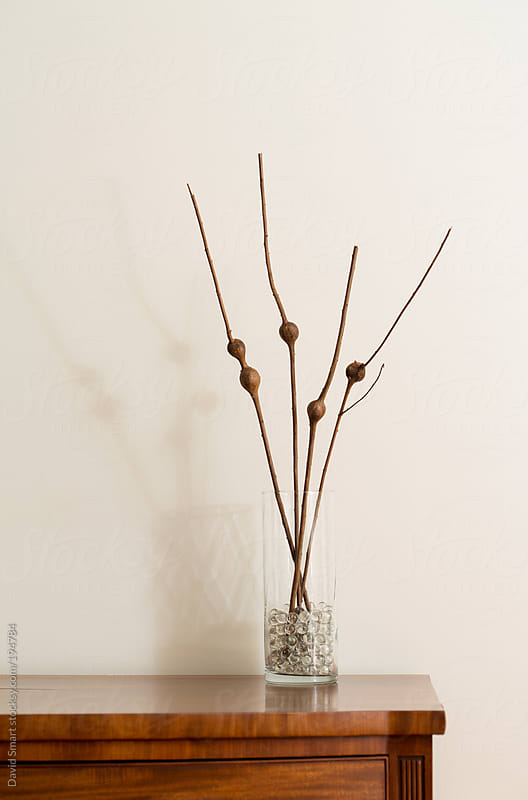 Goldenrod stems with galls in a vase on a wooden table by David Smart for Stocksy United