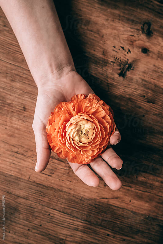 Golden-orange buttercup in woman's hand by Vera Lair for Stocksy United