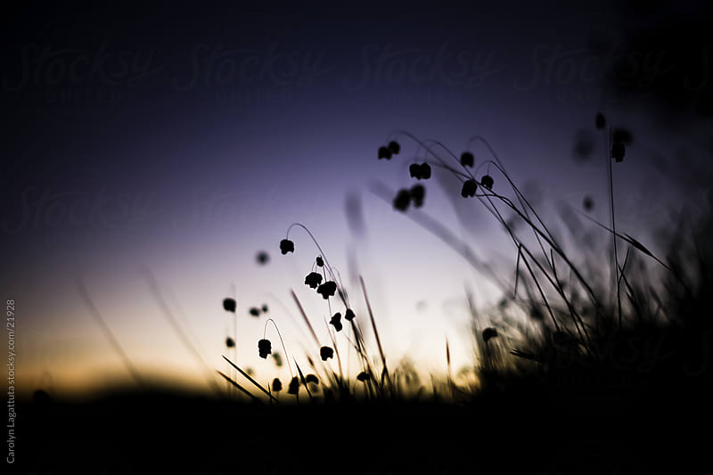 Sunrise and dark purple sky with grass silhouettes by Carolyn Lagattuta for Stocksy United