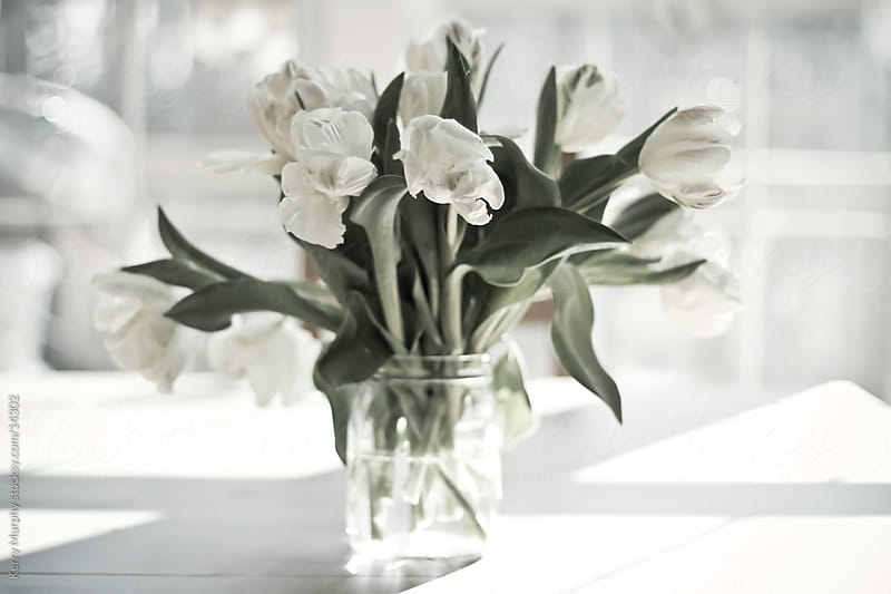 White tulips in vase by window by Kerry Murphy for Stocksy United