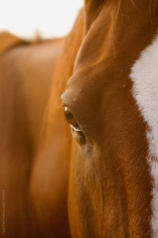 A horse's eye in the light of the afternoon by Tana Teel for Stocksy United