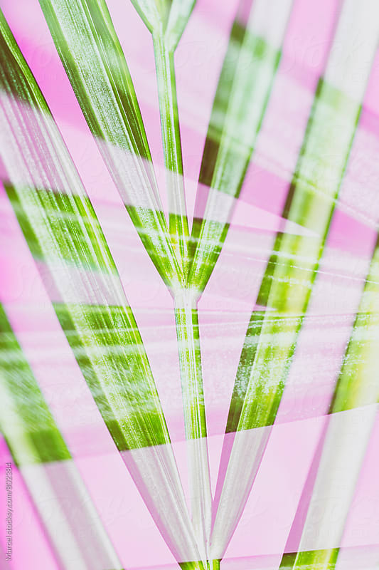 Palm leaf on pink double exposure by Marcel for Stocksy United