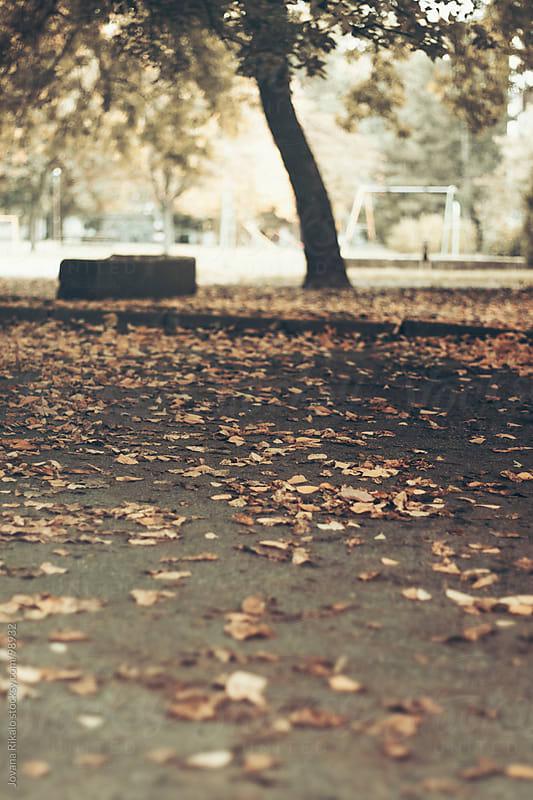 Fallen leaves in the street by Jovana Rikalo for Stocksy United