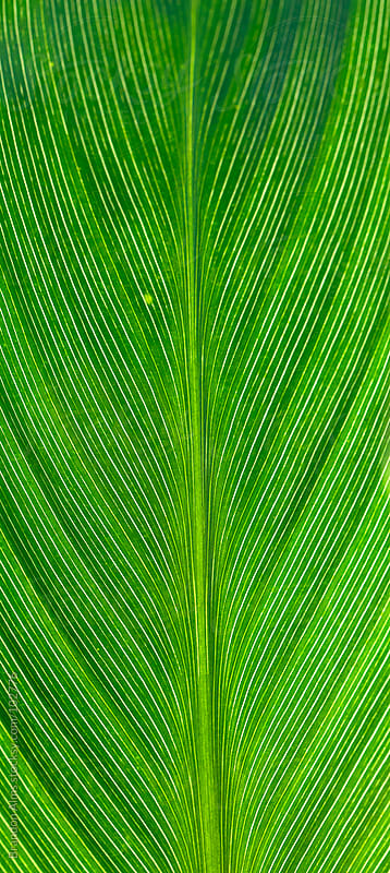 Green Leaf Background Detail by Brandon Alms for Stocksy United