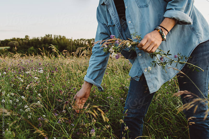 Woman picking wild flowers from field by Carey Shaw for Stocksy United