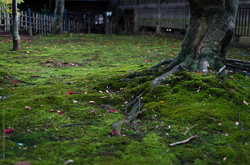 Green Moss in a Japanese Garden by Leslie Taylor for Stocksy United