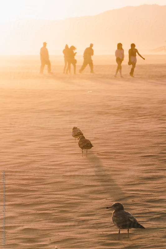 Group of people walking on the beach and seagulls at sunset by Alejandro Moreno de Carlos for Stocksy United