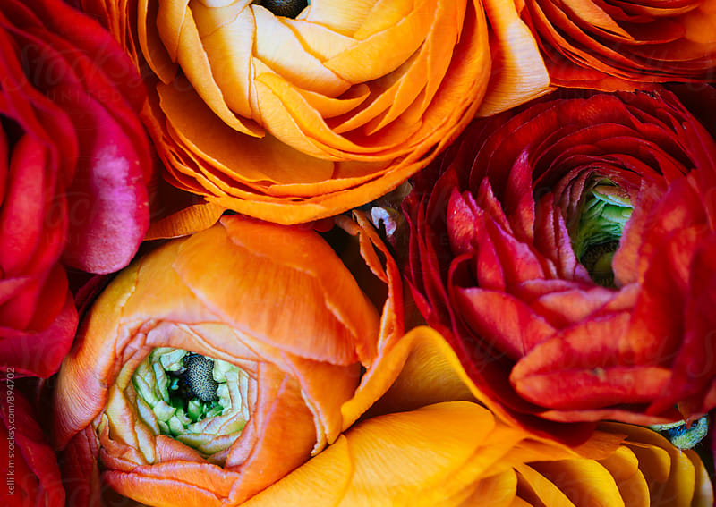 Bouquet of red and orange ranunculus shot from above by kelli kim for Stocksy United
