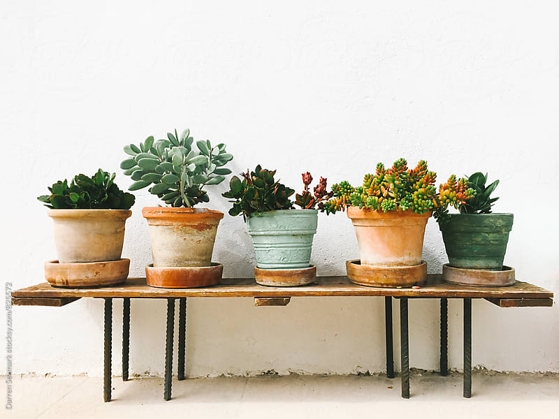 Potted succulent plants on a bench by Darren Seamark for Stocksy United