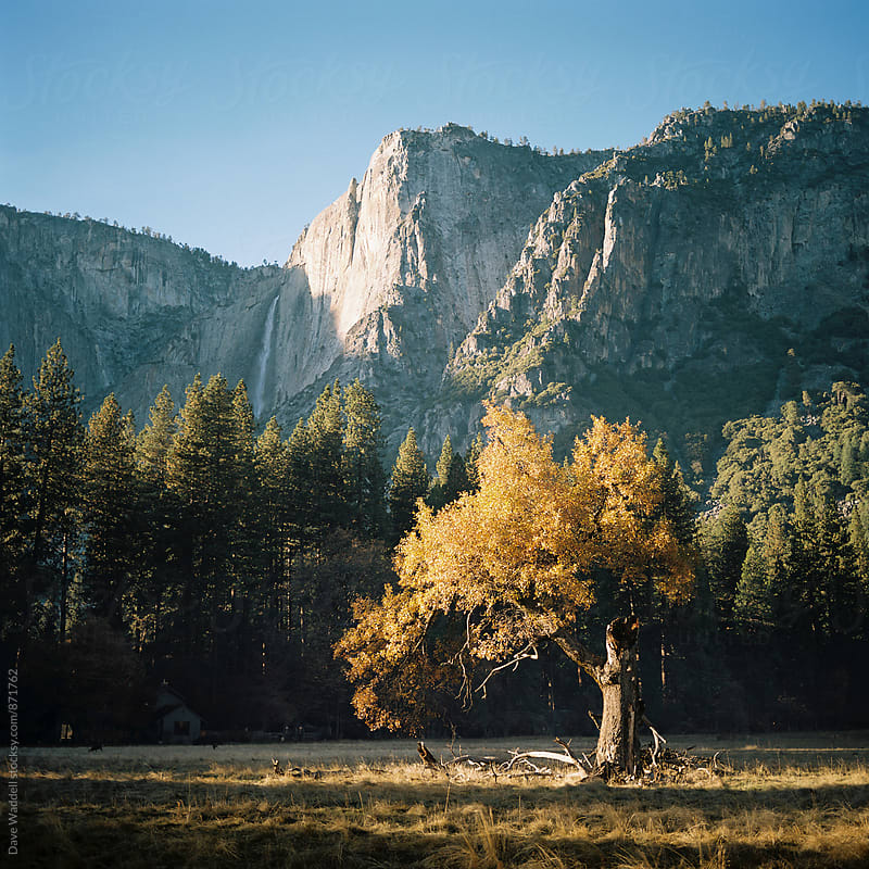 Autumn Tree in Yosemite Valley by Dave Waddell for Stocksy United