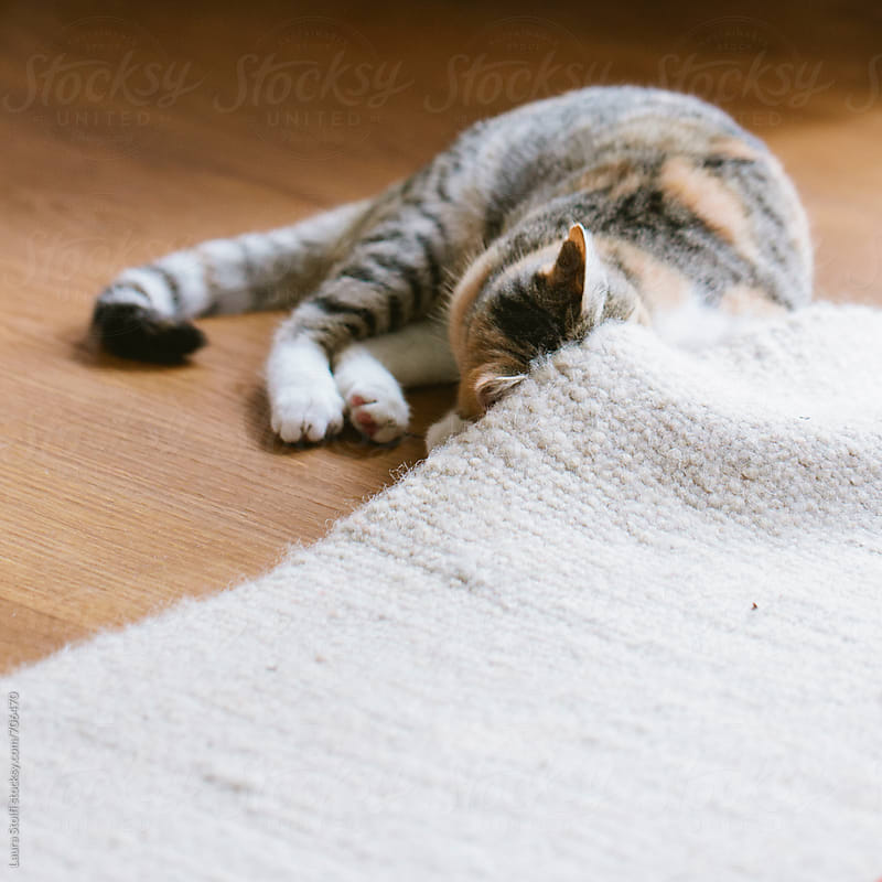 Cat checking if everything is oke under the carpet by Laura Stolfi for Stocksy United