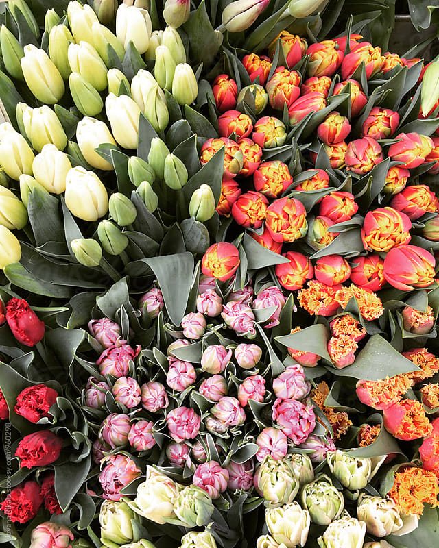 Colorful tulips by Jovana Rikalo for Stocksy United