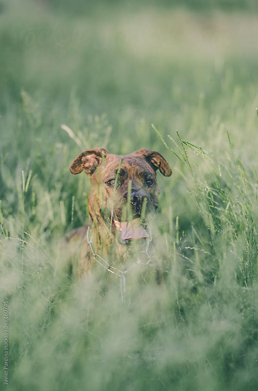 a dog playing in the grass by Javier Pardina for Stocksy United