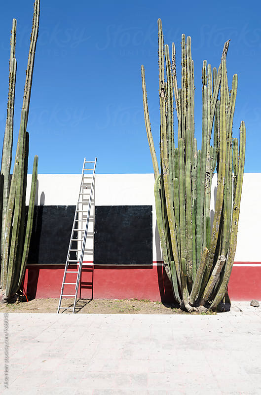 Wall, ladder and a very tall cactus by Alice Nerr for Stocksy United