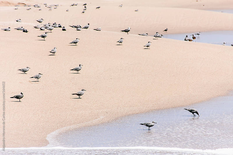 Seagulls and birds on beach shore by Alejandro Moreno de Carlos for Stocksy United