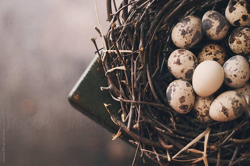 Quail eggs in a nest by Jovana Rikalo for Stocksy United