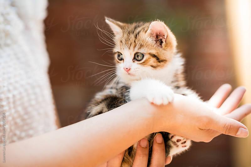 Cute little kitten in woman's hand by Lawren Lu for Stocksy United