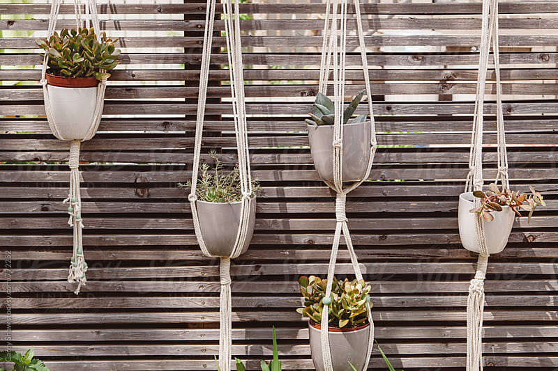 Row of hanging macrame plant holders by Carey Shaw for Stocksy United