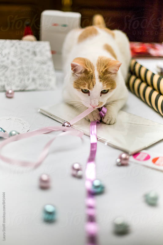 Cat grabs ribbon on table where someone is wrapping christmas presents by Laura Stolfi for Stocksy United
