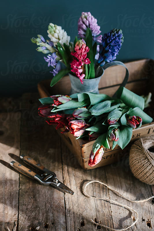 Parrot tulips and hyacinths in a reclaimed wooden box. by Helen Rushbrook for Stocksy United