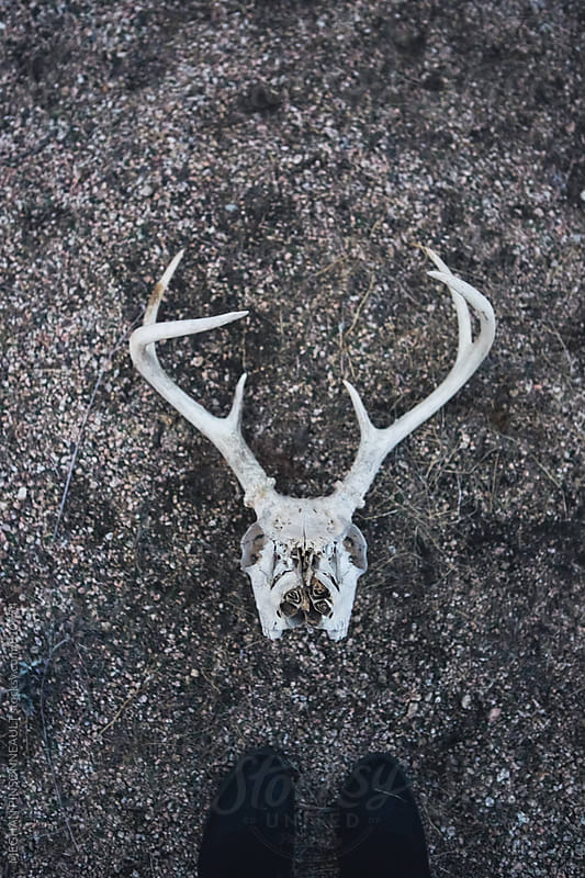 Deer Skull on Ground by Meg Pinsonneault for Stocksy United