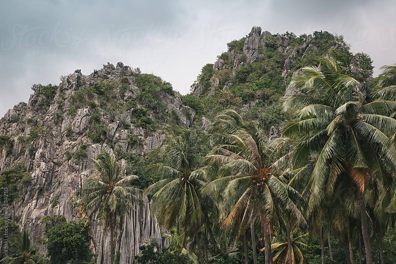 coconut tree by jira Saki for Stocksy United