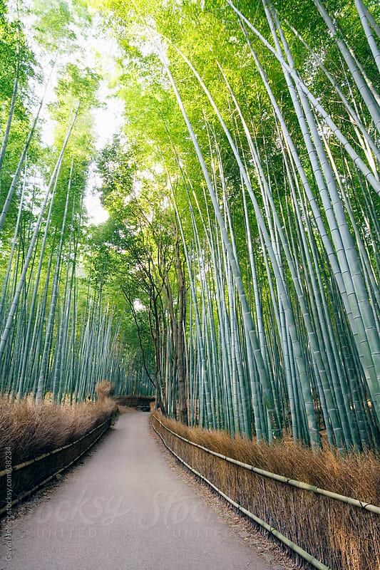 Asia, Japan, Honshu, Kansai Region, Kyoto, Sagano, Arashiyama, bamboo boardered path in the autumn by Gavin Hellier for Stocksy United