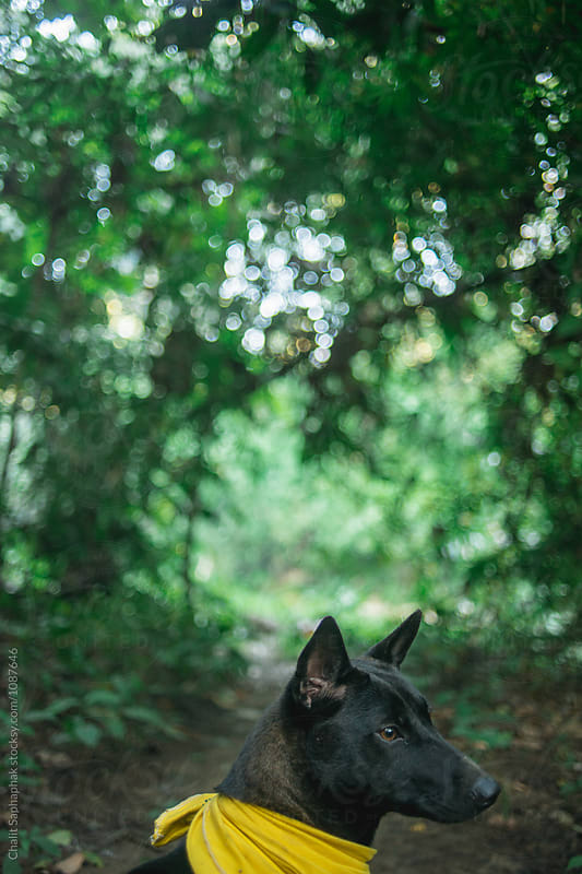 Black dog by Chalit Saphaphak for Stocksy United