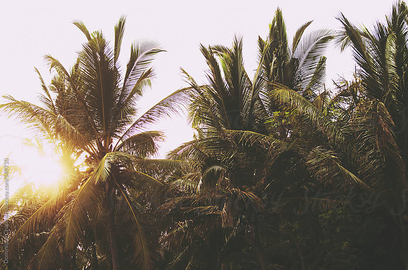 Sunsetting through palm trees in Bali by Dominique Chapman for Stocksy United