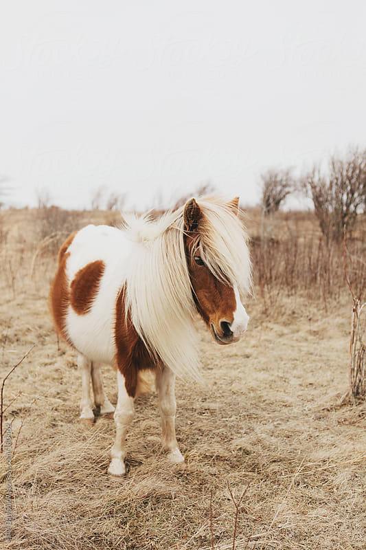 Wild Pony by Ellie Baygulov for Stocksy United
