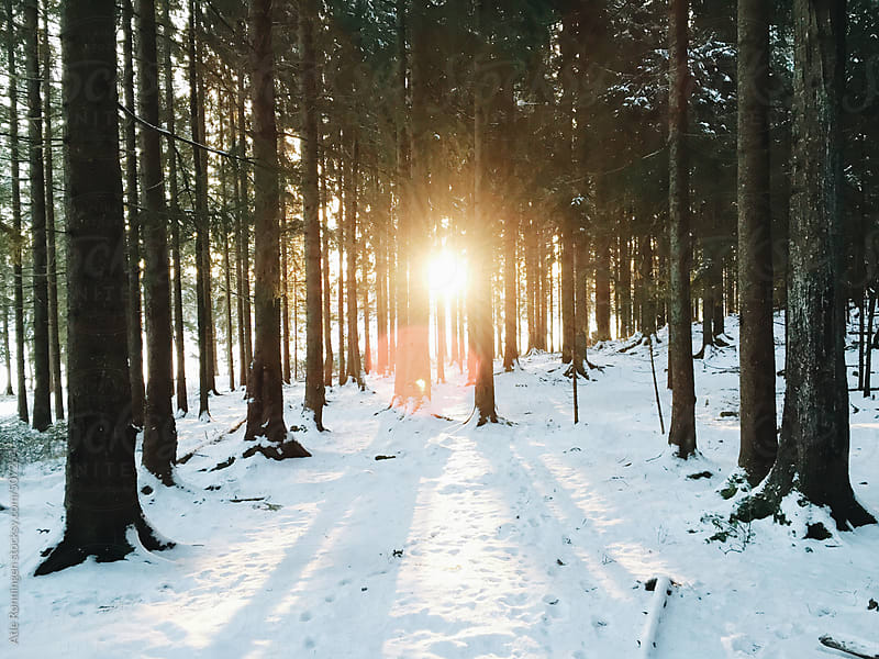 Rising sun trough trees in a forest during winter by Atle Rønningen for Stocksy United