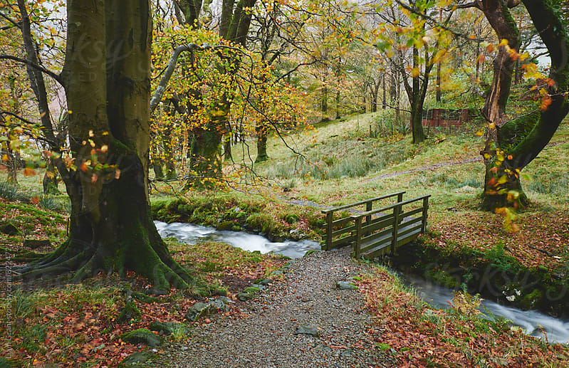 Footbridge and Beech tree blowing in the wind. Cumbria, UK. by Liam Grant for Stocksy United