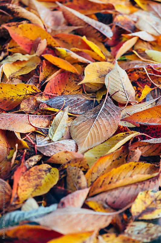 Ground covered with fallen autumn leaves by Rebecca Spencer for Stocksy United