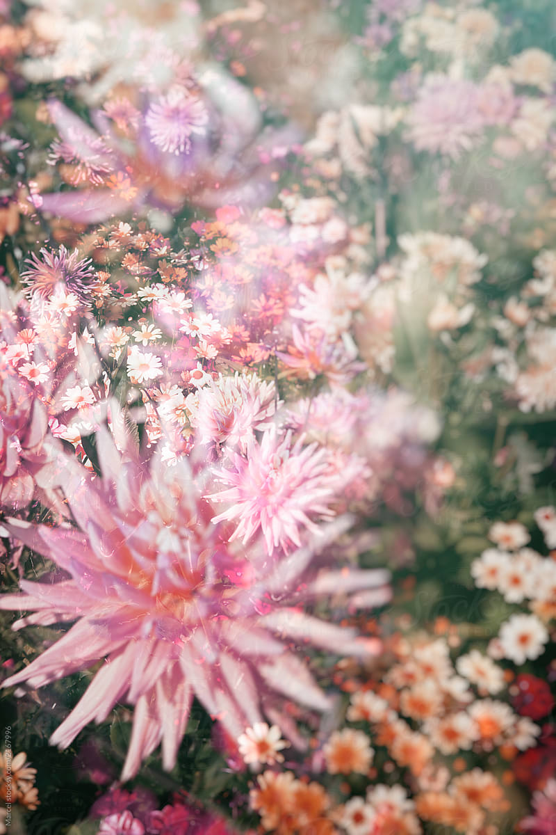 Infrared Double Exposure Of Bright Summer Flowers Stocksy United