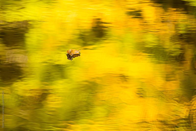 Autumn Leaf Reflection by Rob Sylvan for Stocksy United