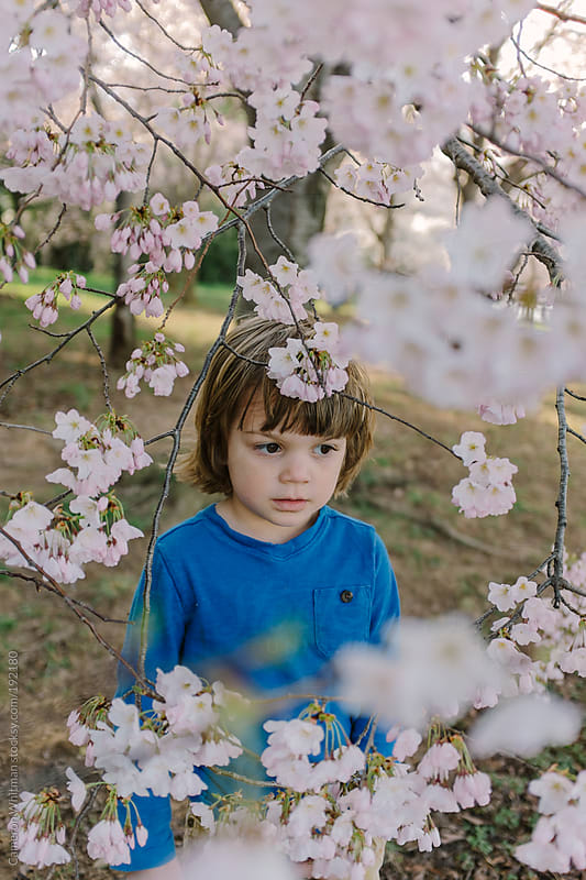 Young boy portrait with Cherry Blossoms in Washington DC by Cameron Whitman for Stocksy United